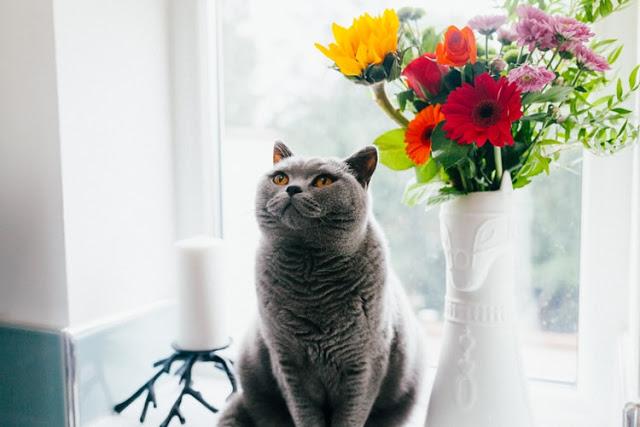Коти захищають вас та ваш будинок від злих духів й негативної енергії